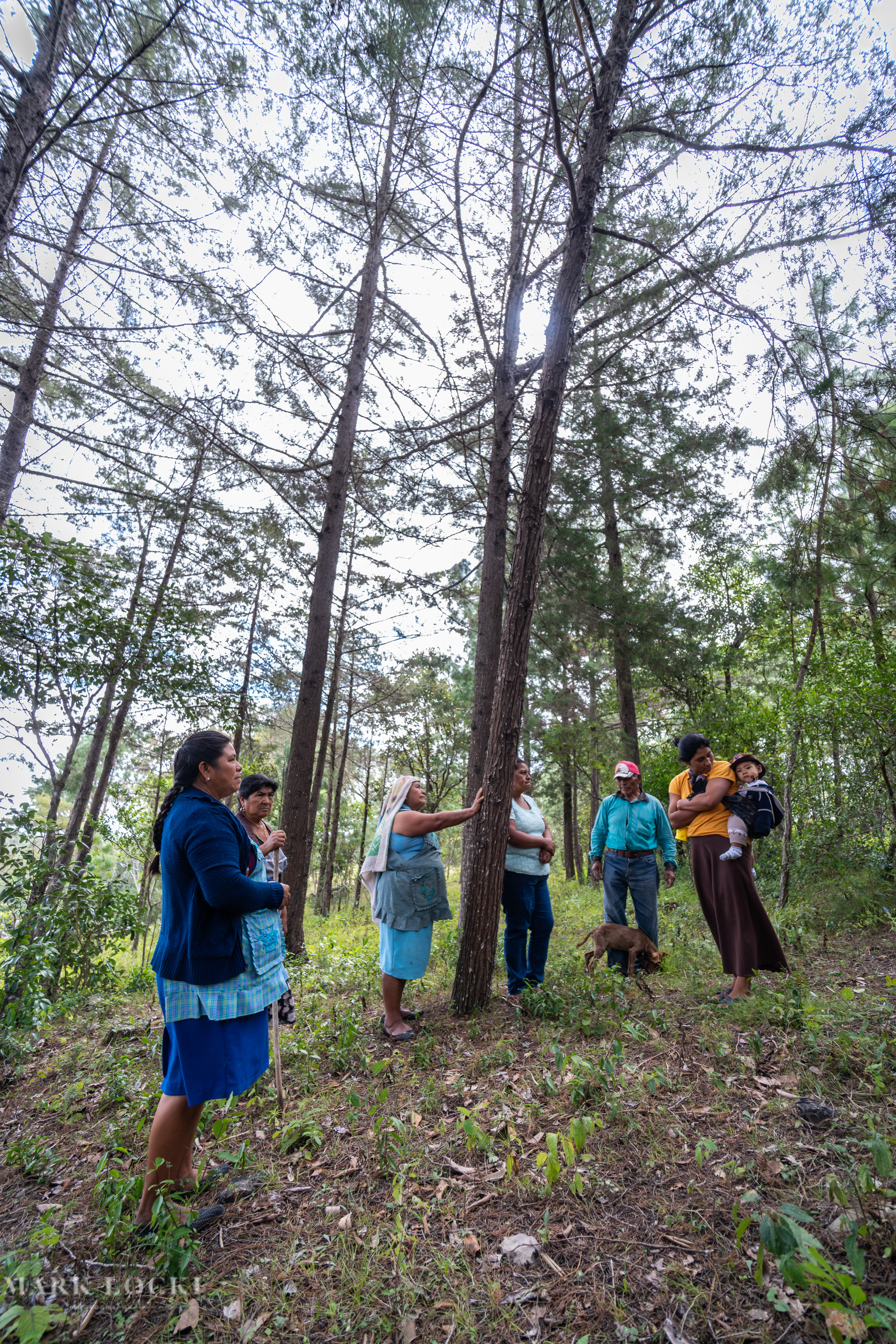 Residents of Yaluma, Chiapas stand in their forest that was planted with the help of Cooperativa AMBIO