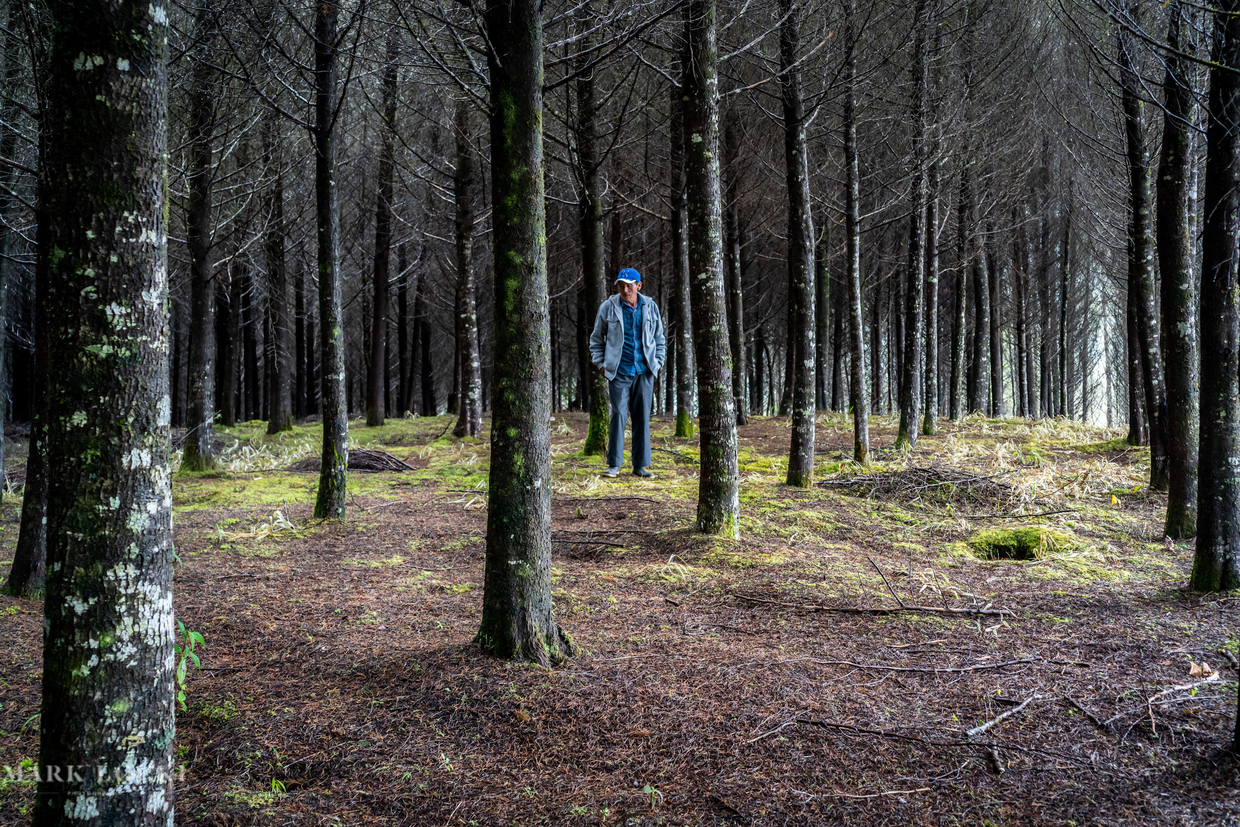 A man stands in a forest that was replanted after a wildfire, Tziscao, Chiapas, Mexico