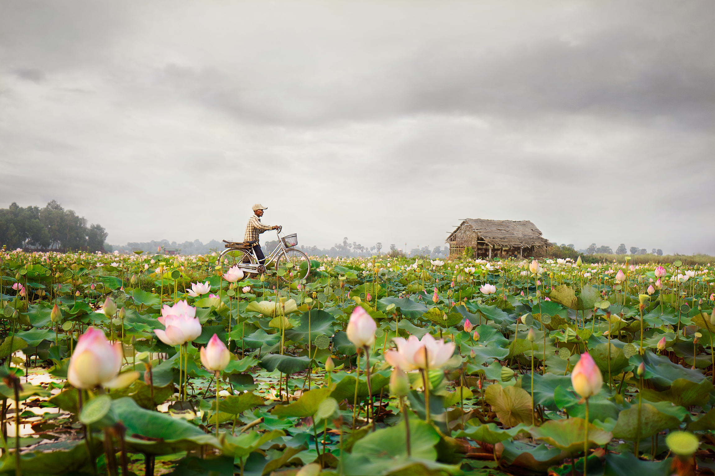 Sense of Place Category  : Lotus Farm in Cambodia