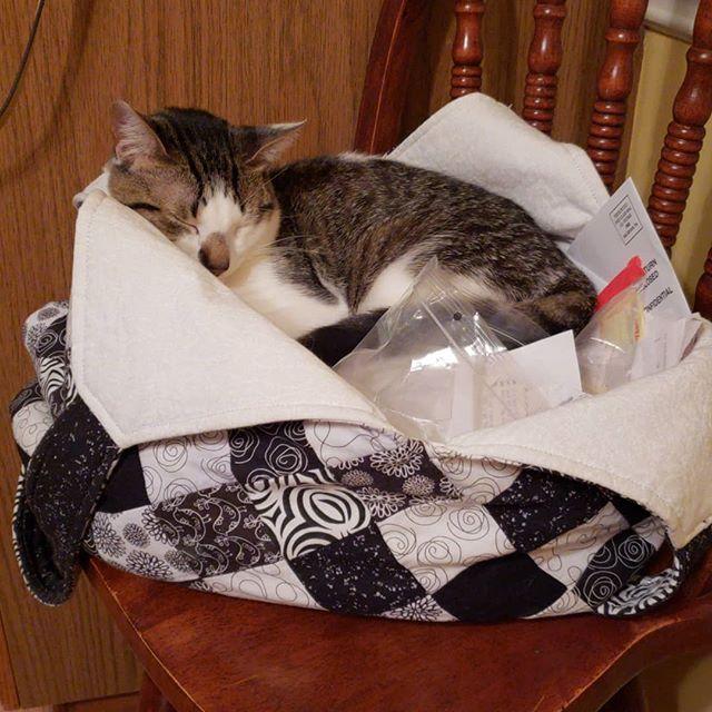 #mondobag #catnap #tryingtodopaperwork
