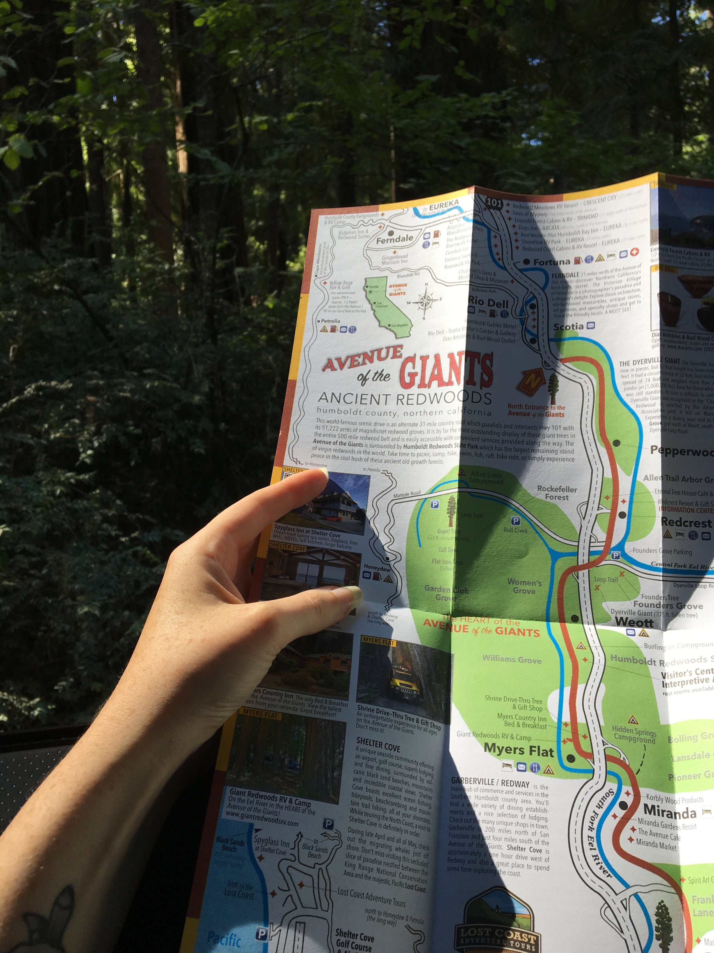 California Road Trip: Avenue of the Giants — The Detour Effect on