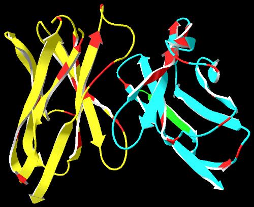 Antibody-Epitopes