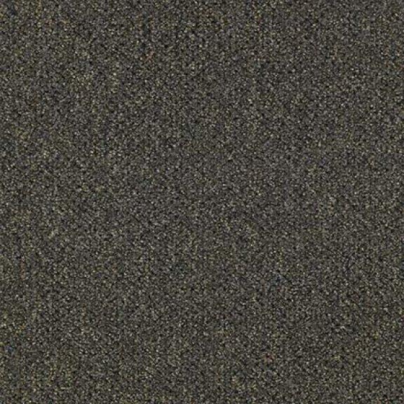 Brown Thrasher 8509