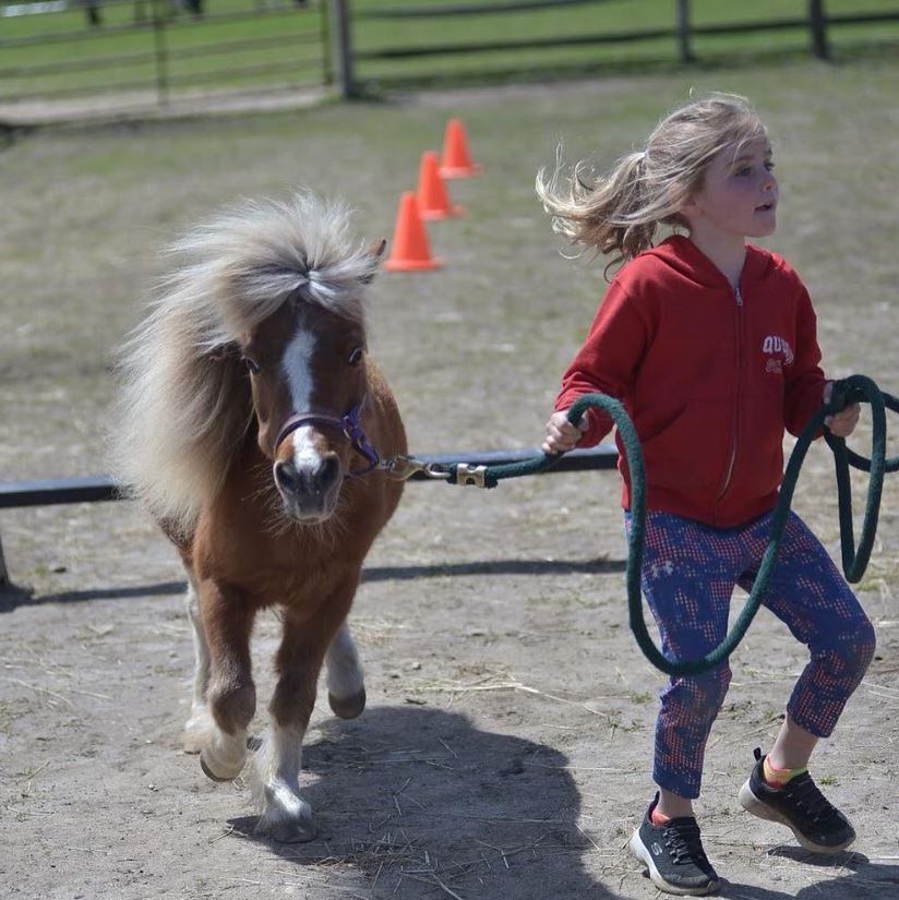 Summer Camps - @ Spirit's Promise Equine Rescue