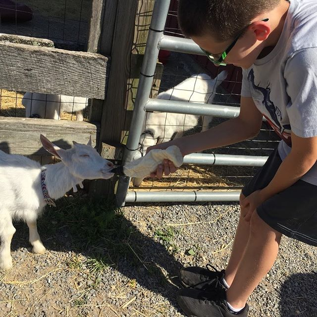 Another day on the farm! li_sportspark #mrvsummercamps #Riverhead #RockyPoint #WadingRiver #Quoque #Westhampton #Mattitick #Longwood #Eastport #Shoram #Brookhaven #CenterMoriches #hamptonbays #Southhampton #hamptons #longisland #arts #STEAM #summercamp #paintball #sports #summercamp #thehamptons #montauk #fireisland #brooklyn #queens #newyork #kids #fitfam #summercamp @newsday @spiritspromise @news12li #love #kids
