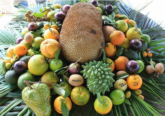 Fruit Varieties -