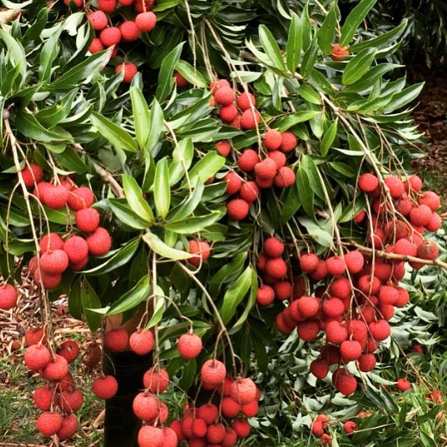 Fresh Fruit - Delivered