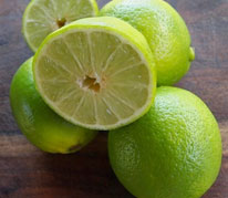 Tahitian Lime - 'Tahitian Lime', also known as 'Bearss Lime' is a medium sized, vigorous tree that bears fruit about ten months of the year. The fruit is seedless, juicy and the trees are prolific, dependable bearers. The skin of the fully ripe fruit will turn slightly yellow, but the juicy flesh inside is pale green, and has a true acid lime flavor. The consistent fruiting, dark green leaves and almost constant flowering make the Tahitian lime an excellent orchard tree or container plant for the lanai.