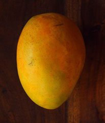 Florigon - Florigon is a large, vigorous grower with yellow fruits and excellent flavor. The yellow melting flesh is juicy and fibreless. It bears 10 to 16 ounce fruits annually between May and July. It is anthracnose resistant.