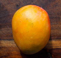 Julie - Julie is a dwarf, North Africa selection. It is a small, slower grower with fruit size from 6 to 10 ounces. The summer fruit is fibreless, smooth and delicious and the skin is yellow with a red blush. It is best to plant in dry areas.