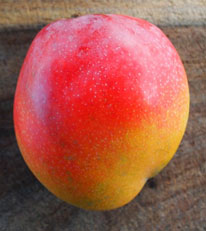 R2E2 - R2E2 is a smooth skinned golden fruit with a red blush color that tends to be oblong shaped with a very small seed. It bears a regular heavy crop of fruits 16 to 24 ounces that are rich, melting and spicy with no fiber. Trees fruit best in dry areas.