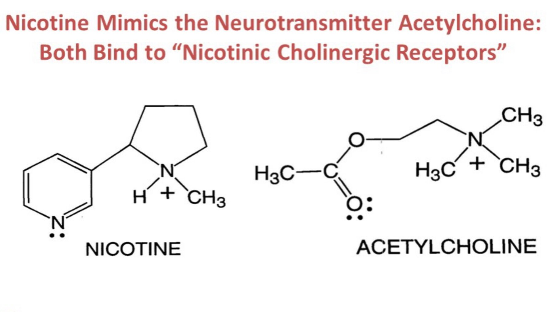 Mode of Action - Nicotinic Cholinergic Receptors