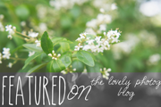 Featured-onThe-Lovely-Blog-Button