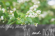The-Lovely-Photog-Blog-Button