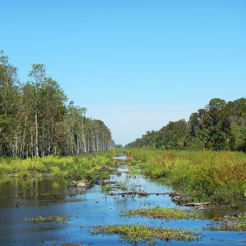 maurepas_cleared_right_of_way_wetland_emergent_forested_pipeline_construction_project_swamp.jpg