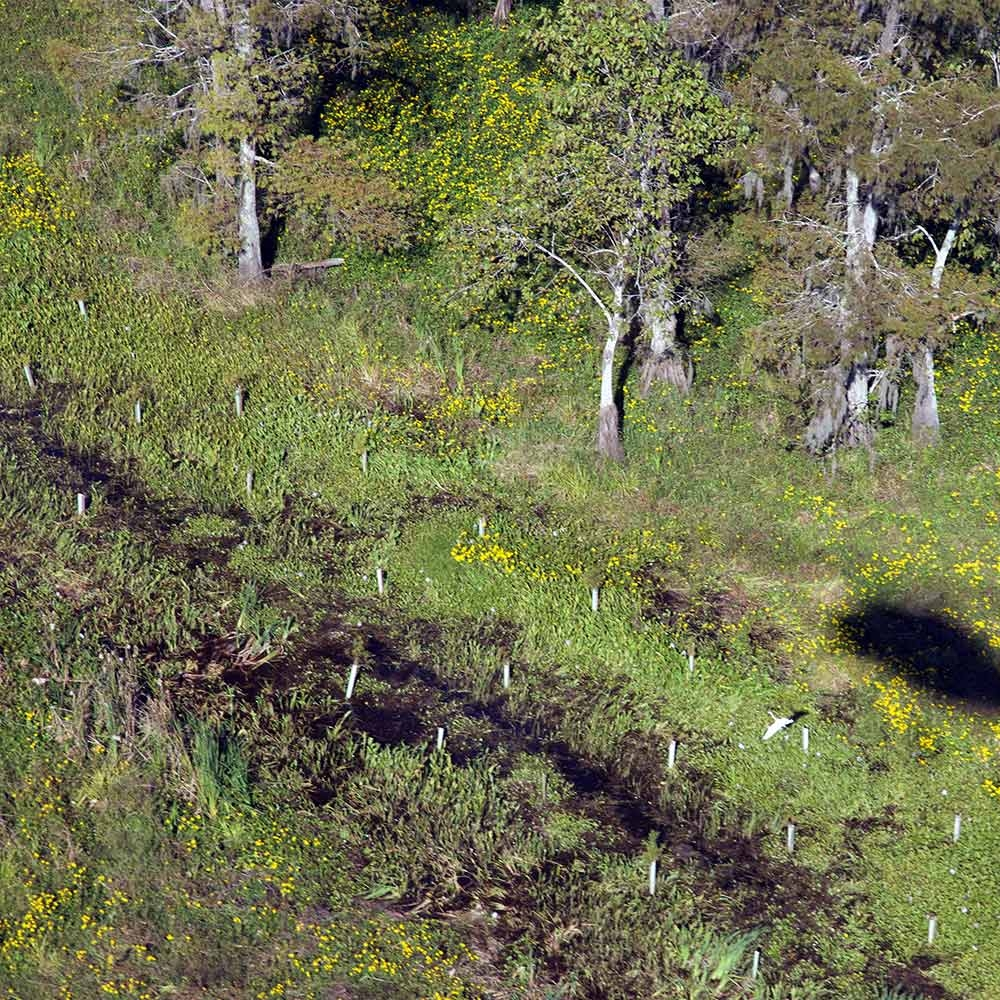 maurepas_swamp_mitigation_helicopter_wetland.jpg