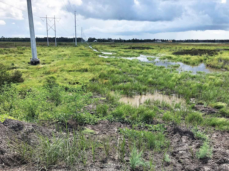 Transmission-line_marsh_wetland.jpg