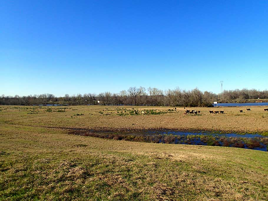 bluegrass_river_crossing_pasture.jpg