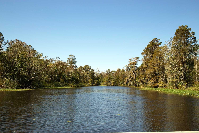 maurepas_swamp_blind_river_scenic_wetland_swamp.jpg