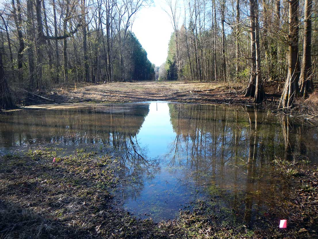 boardwalk_130_pipeline_right_of_way_cleared_wetland_emergent_forested.jpg