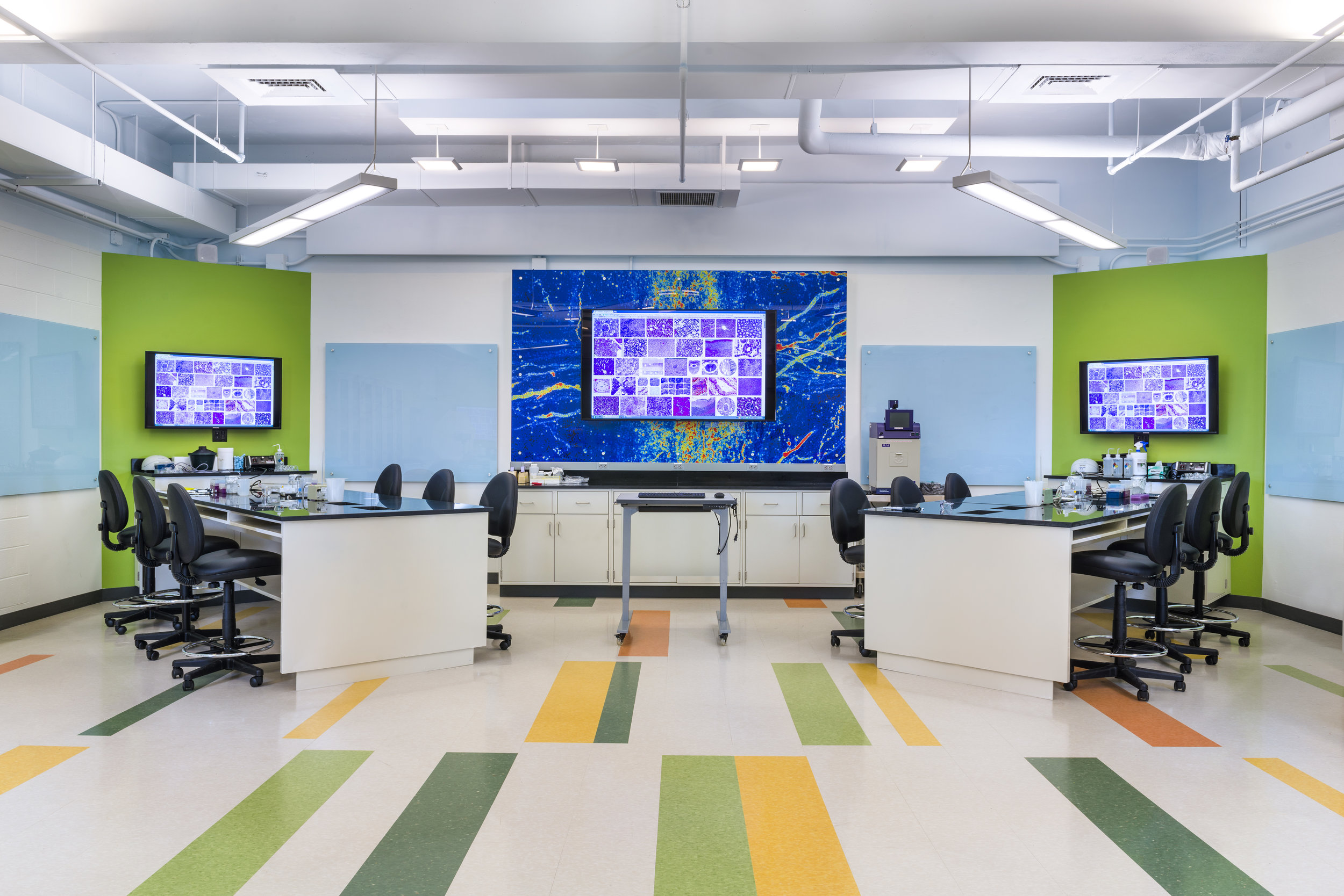Brown University HHMI Lab