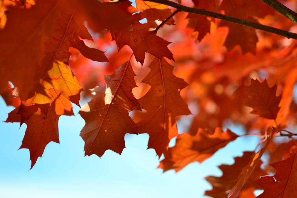 fall-1024x683.jpeg