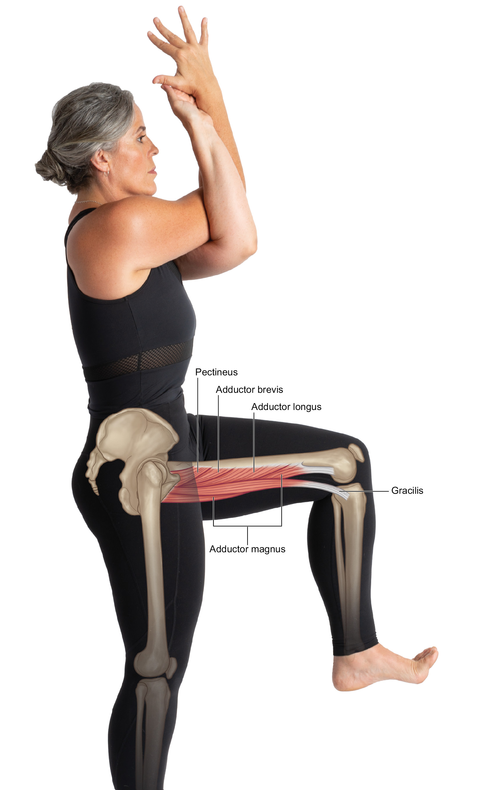 Figure_7.8_Hip_Adduction_copy.jpg