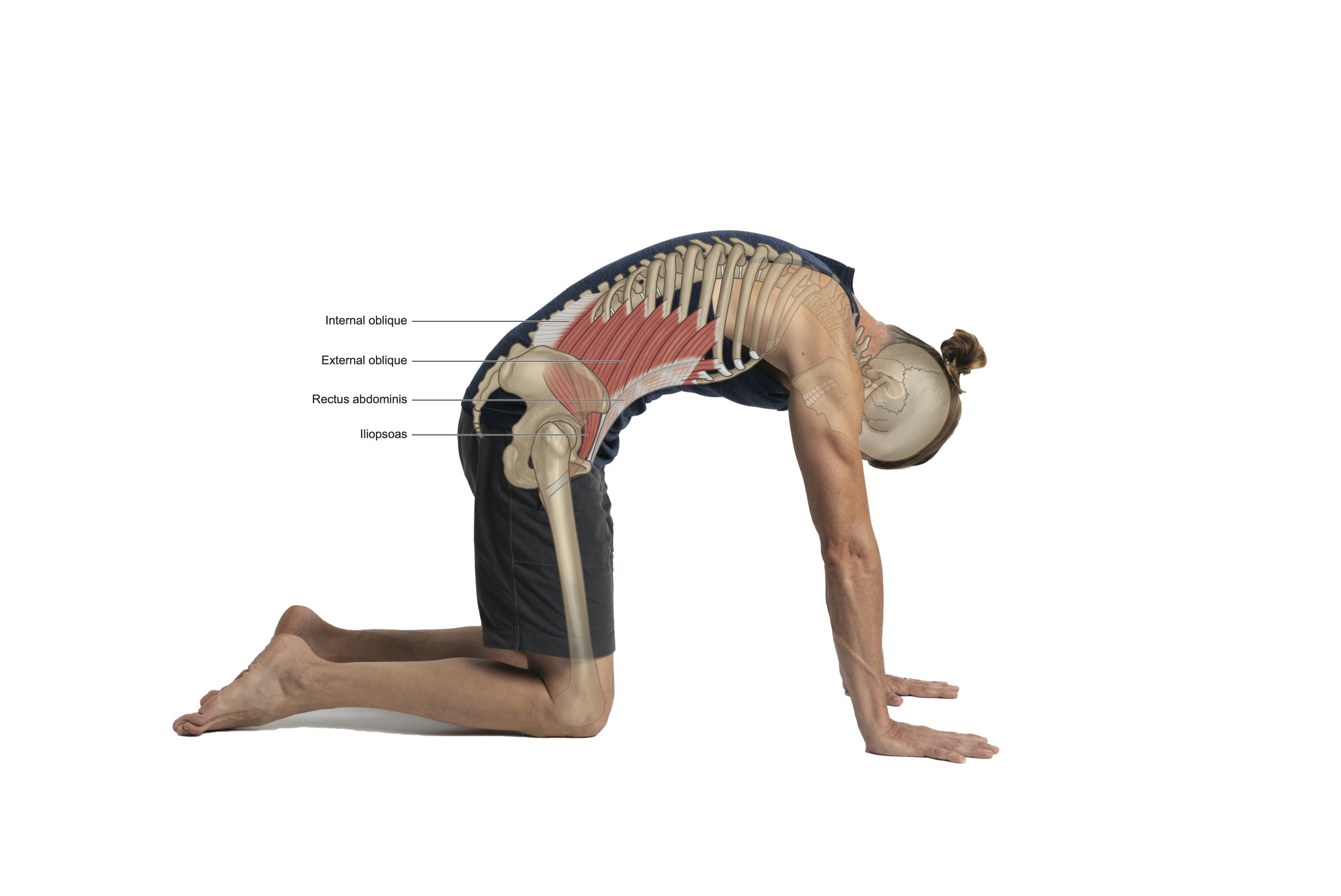 From  Embodied Posture: Your Unique Body and Yoga