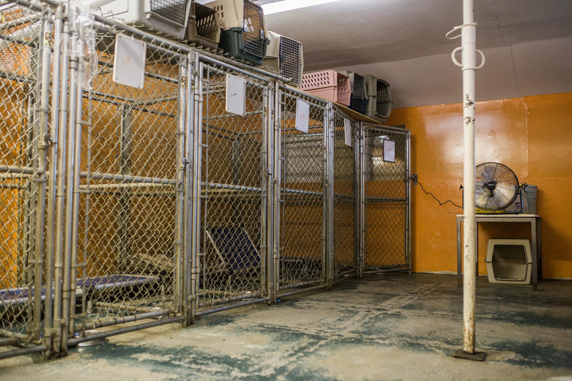 Barking-Good-Facility-18.jpg