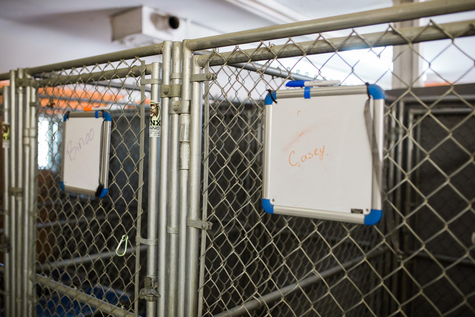 Barking-Good-Facility-19.jpg