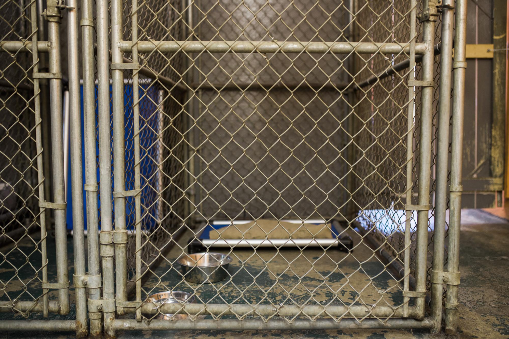 Barking-Good-Facility-20.jpg