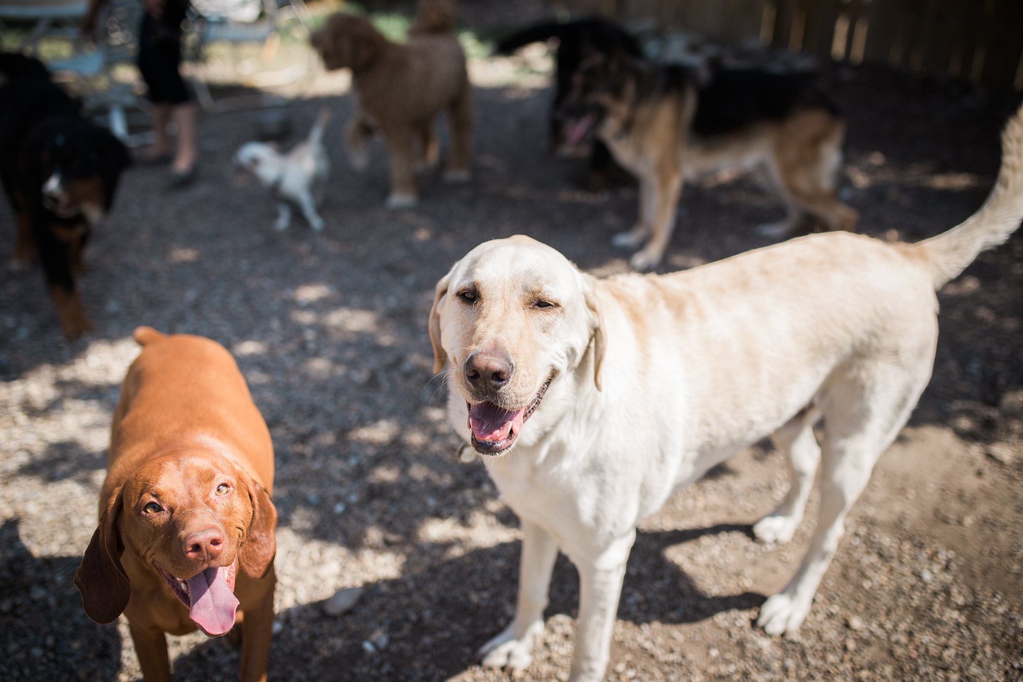 Barking-Good-Dogs-7.jpg
