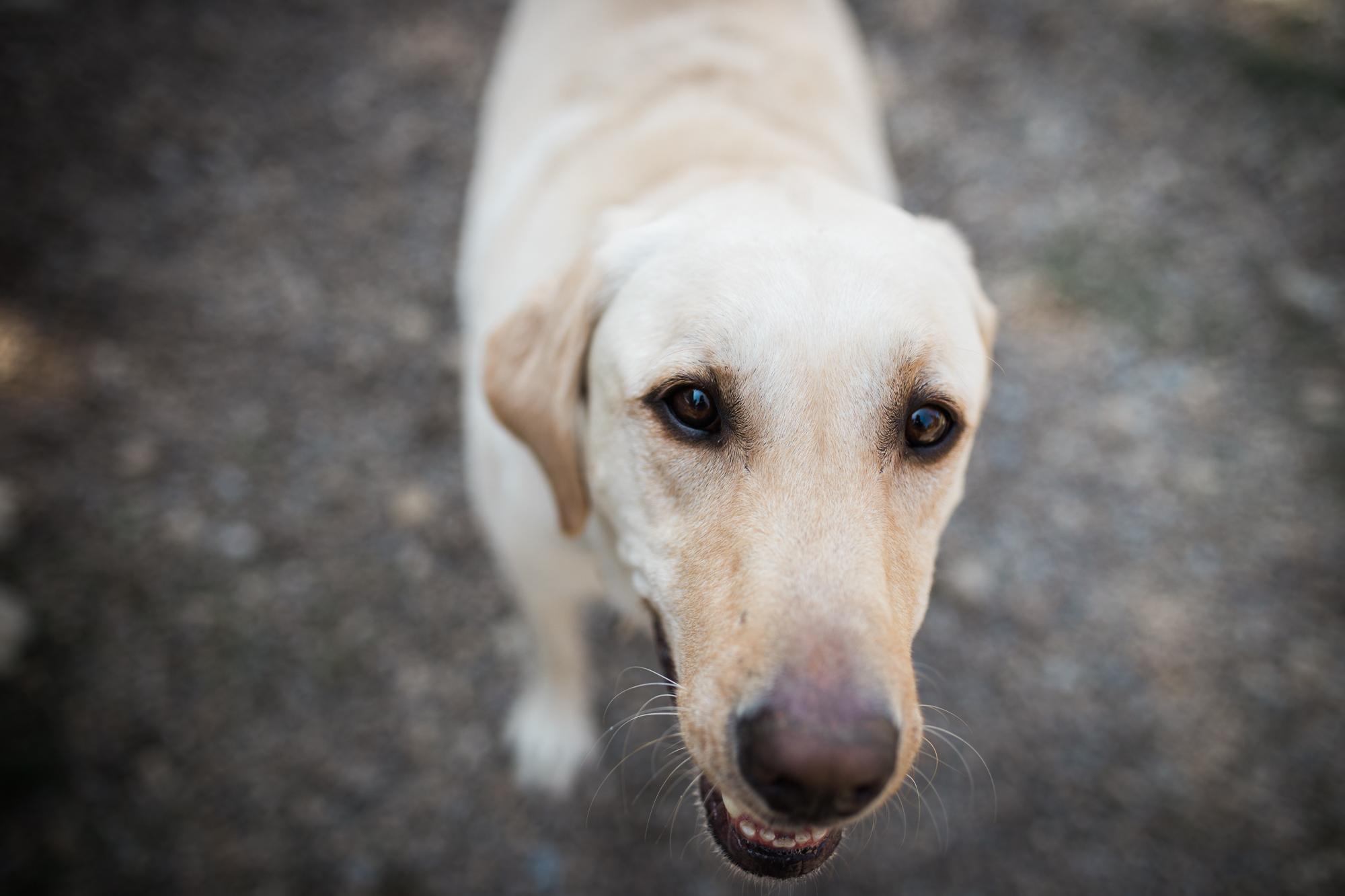 Barking-Good-Dogs-13.jpg