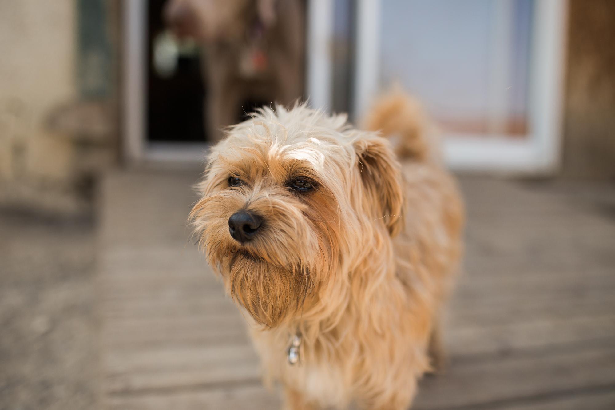 Barking-Good-Dogs-48.jpg