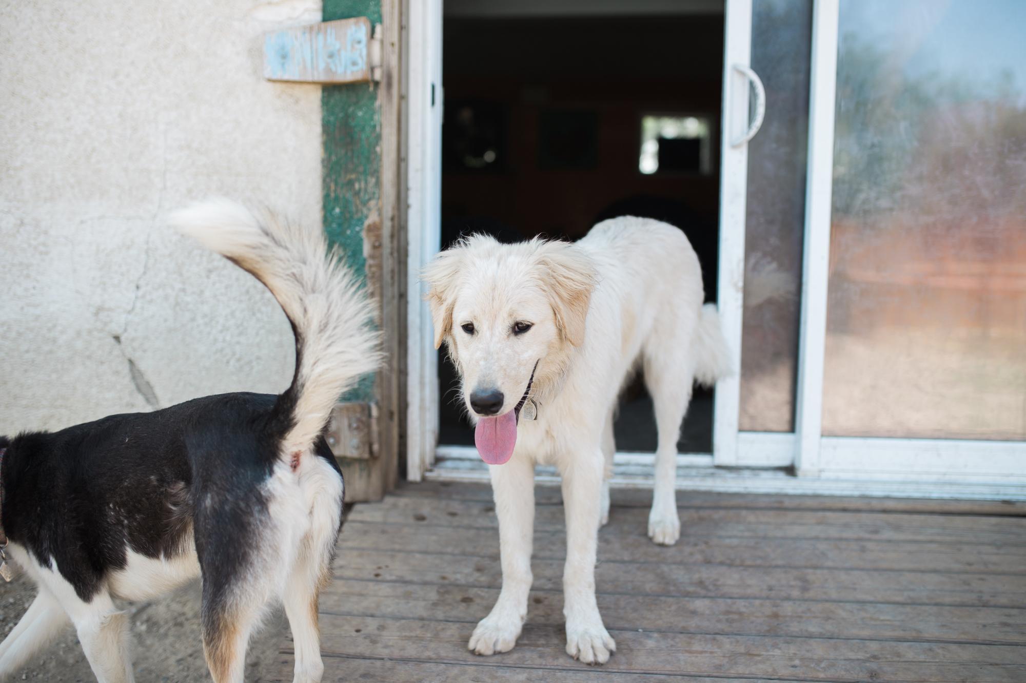 Barking-Good-Dogs-61.jpg