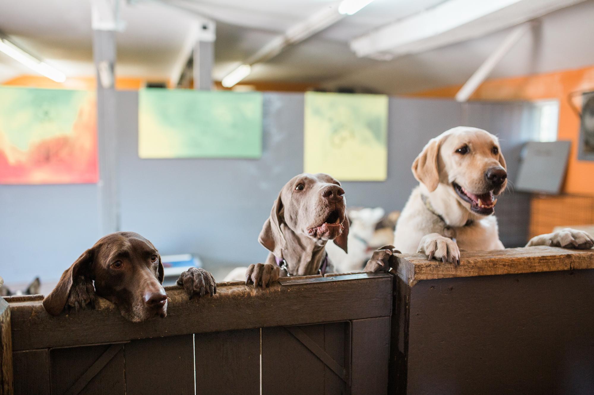 Barking-Good-Dogs-42.jpg