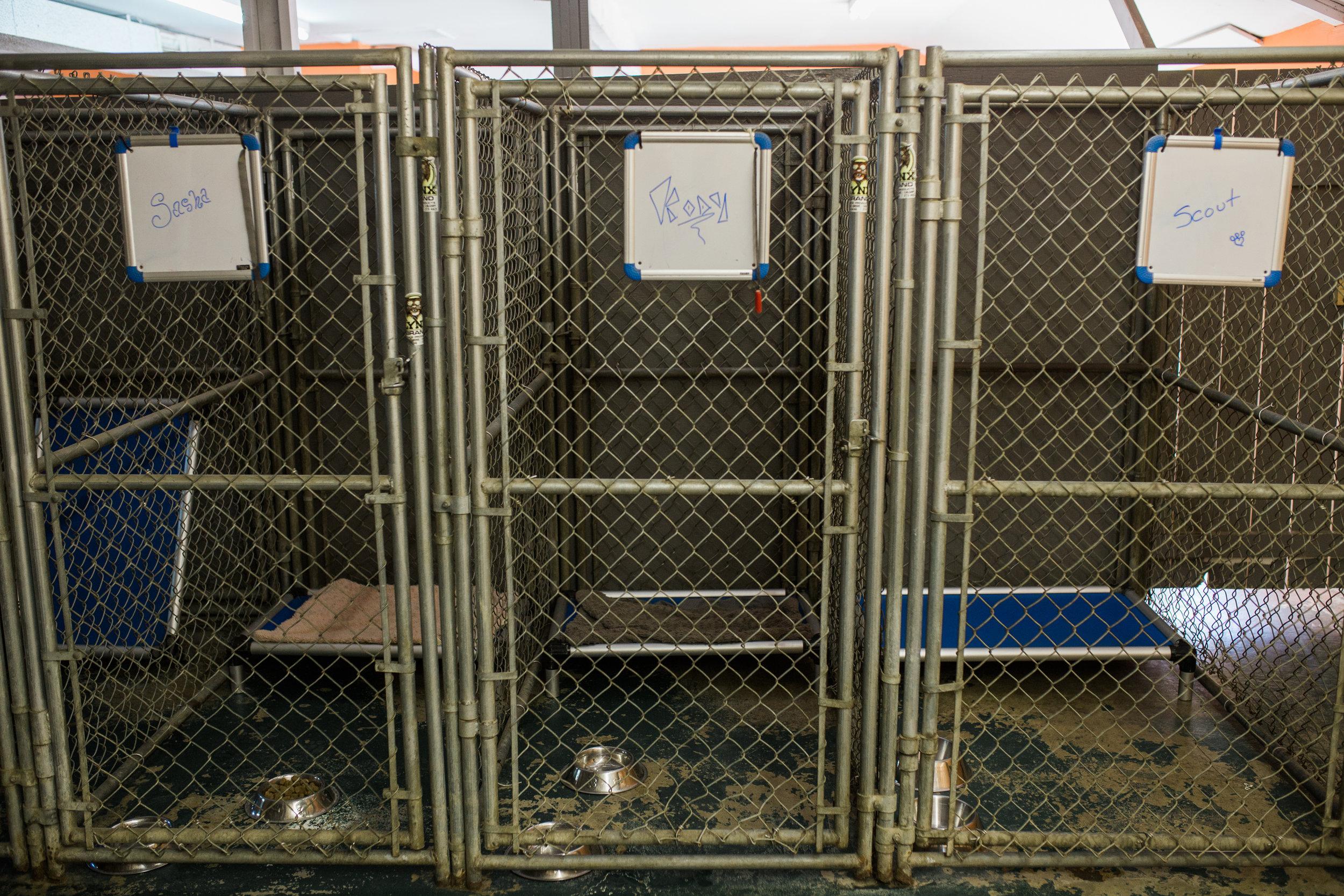 BarkingGood-Facility-24.jpg