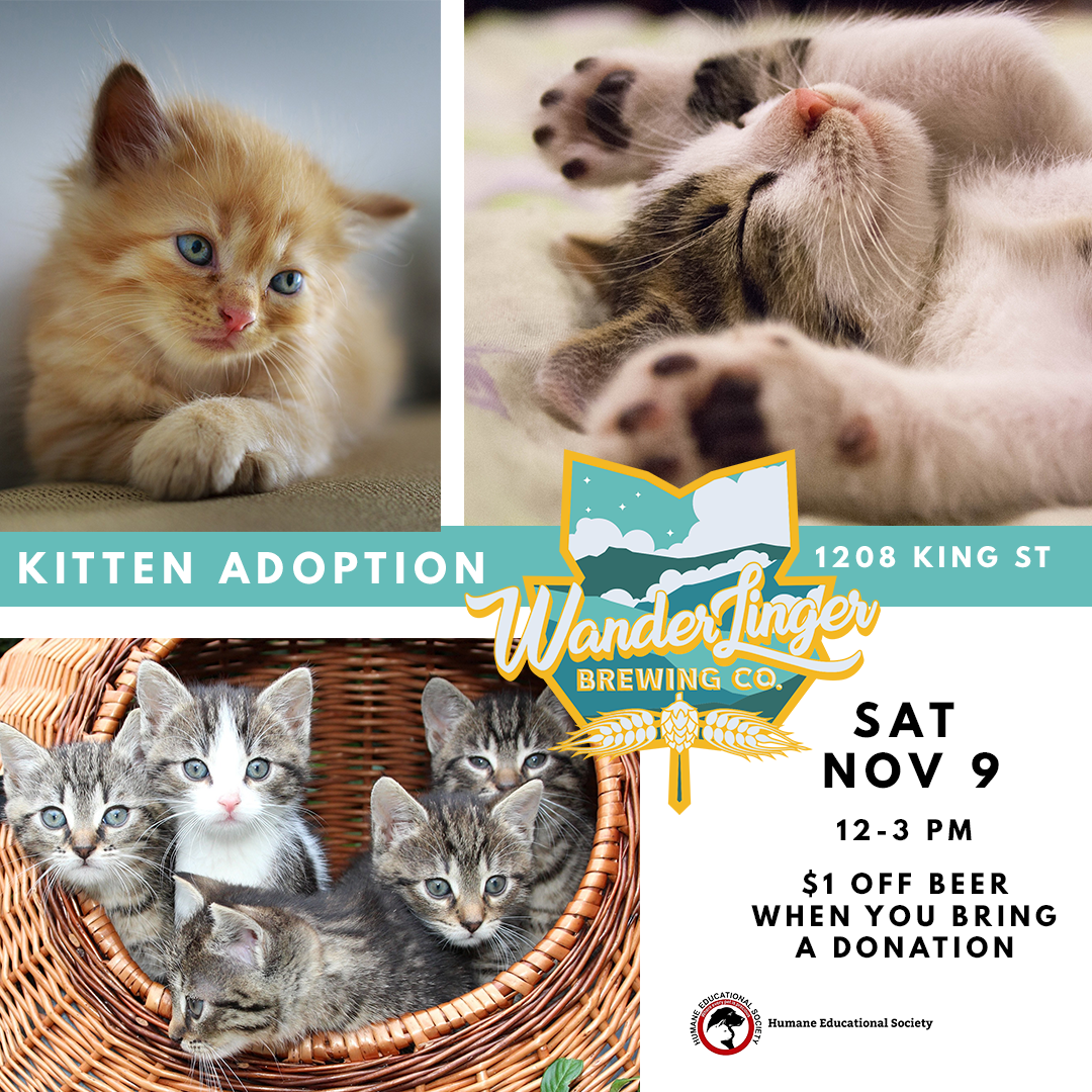 IG - KITTEN ADOPTION - NOV 9.png