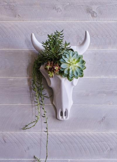 Ceramic Skull Wall Planter @ Wayfair
