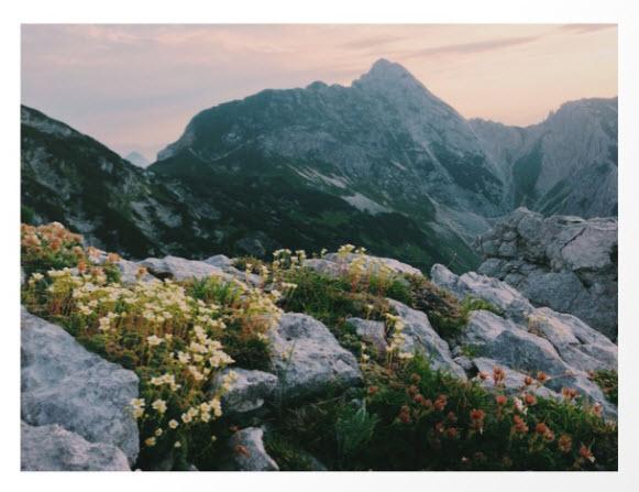 Mountain Flowers at Sunrise by Bor Cvetko