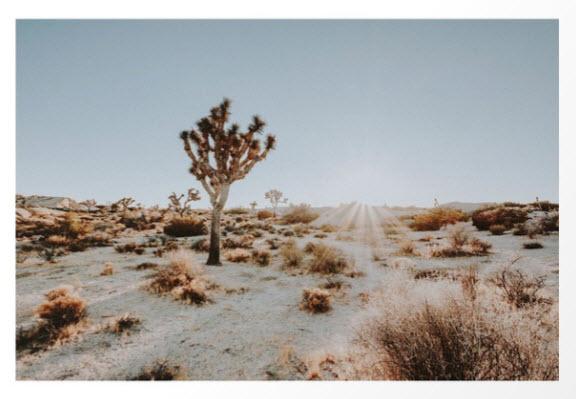 Joshua Tree Art Print by Desert Daze