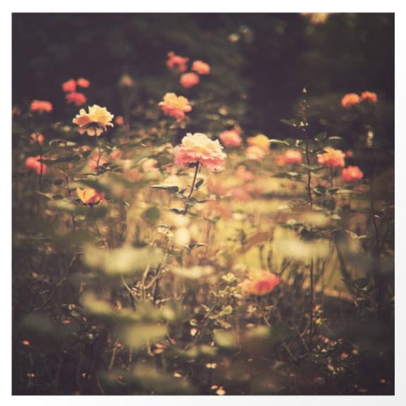 One Rose in a Magic Garden by Caroline Mint