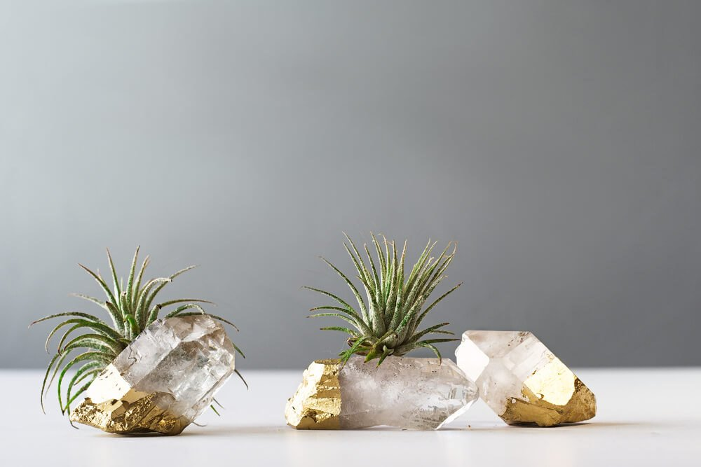 Air Plant Gold Dipped Quartz Crystal by AirFriend - Etsy