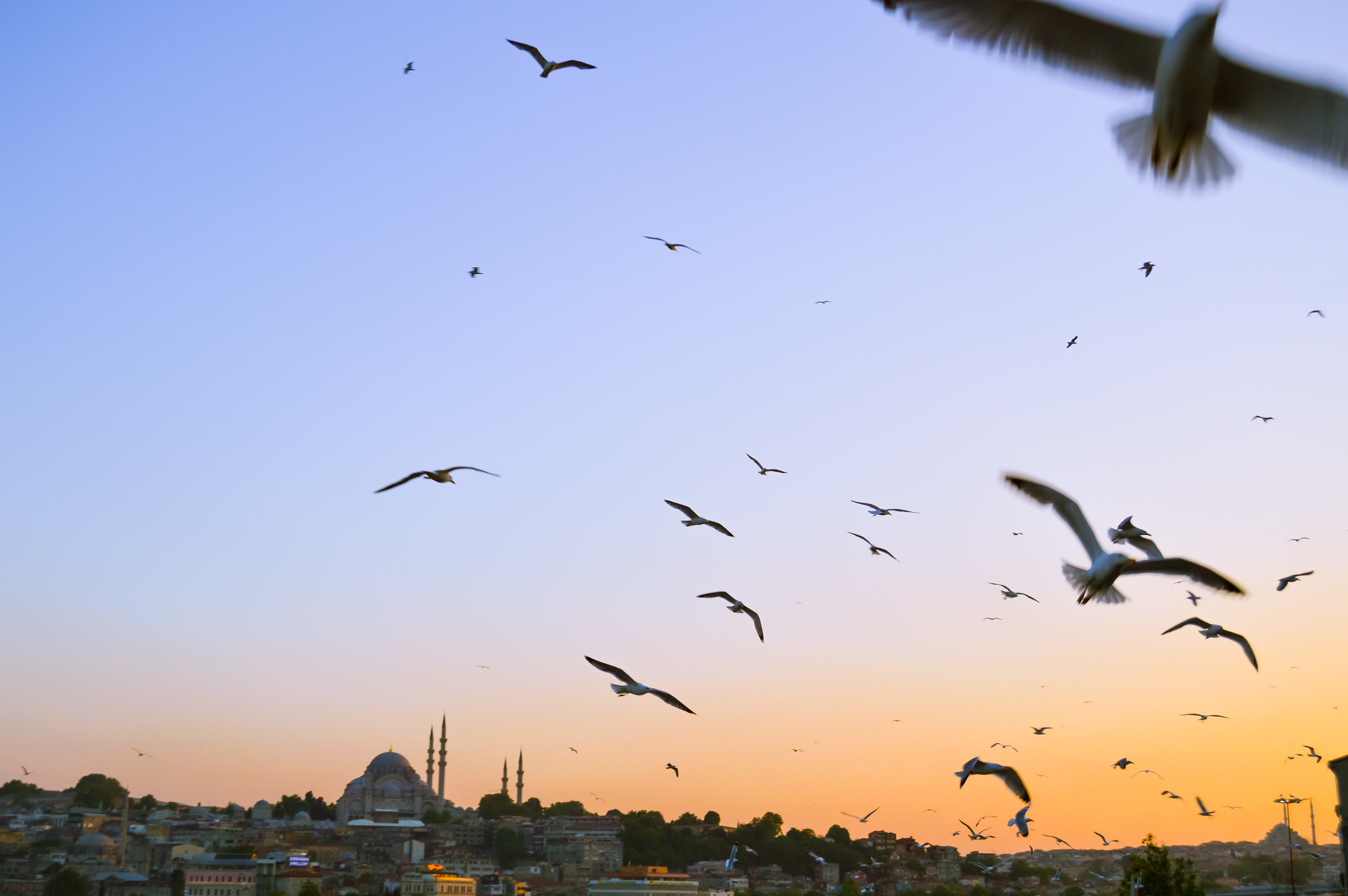View from Galata Bridge Rowhomes Mosques Skyline Bosporus Bosphorus Blue Sky Muslim Ottoman Empire Architecture Istanbul Turkey Blue Mosque Hagia Sophia