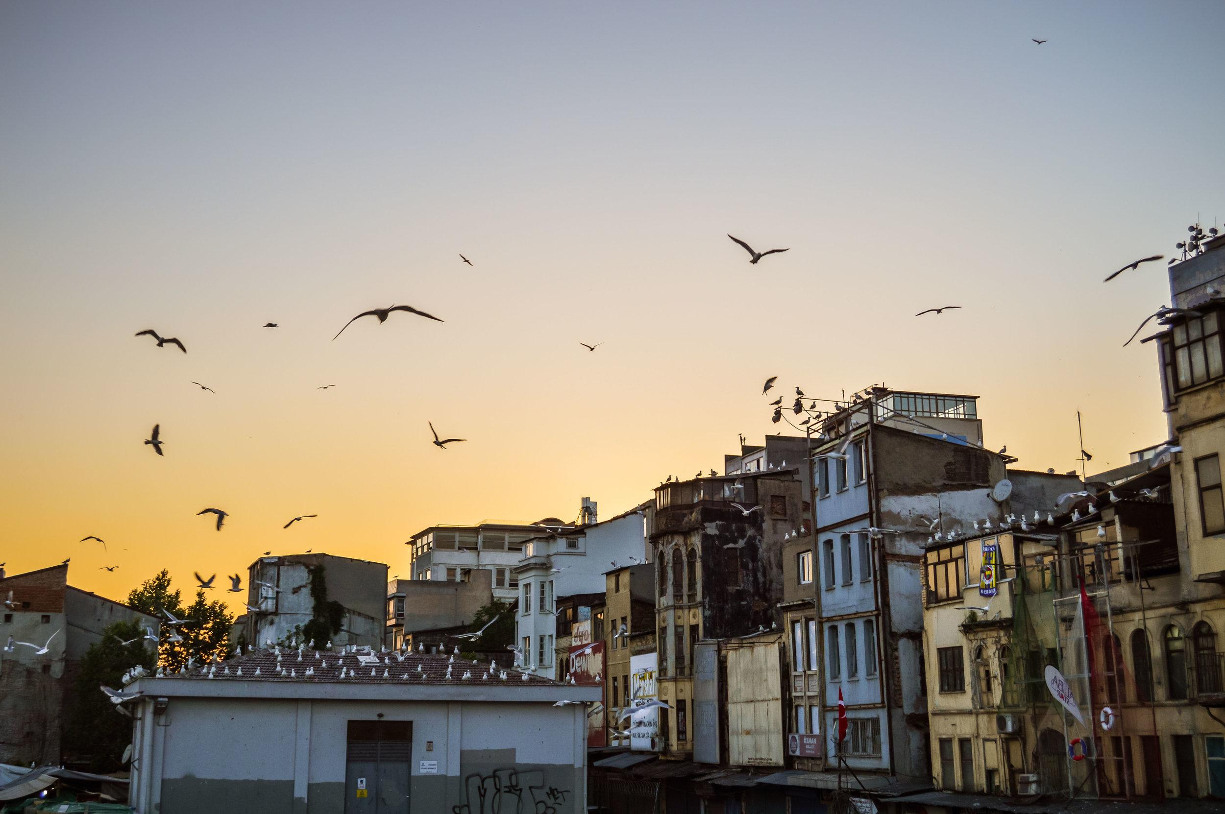 Seagulls Rowhomes Skyline Sunset Blue Sky Muslim Ottoman Empire Architecture Istanbul Turkey
