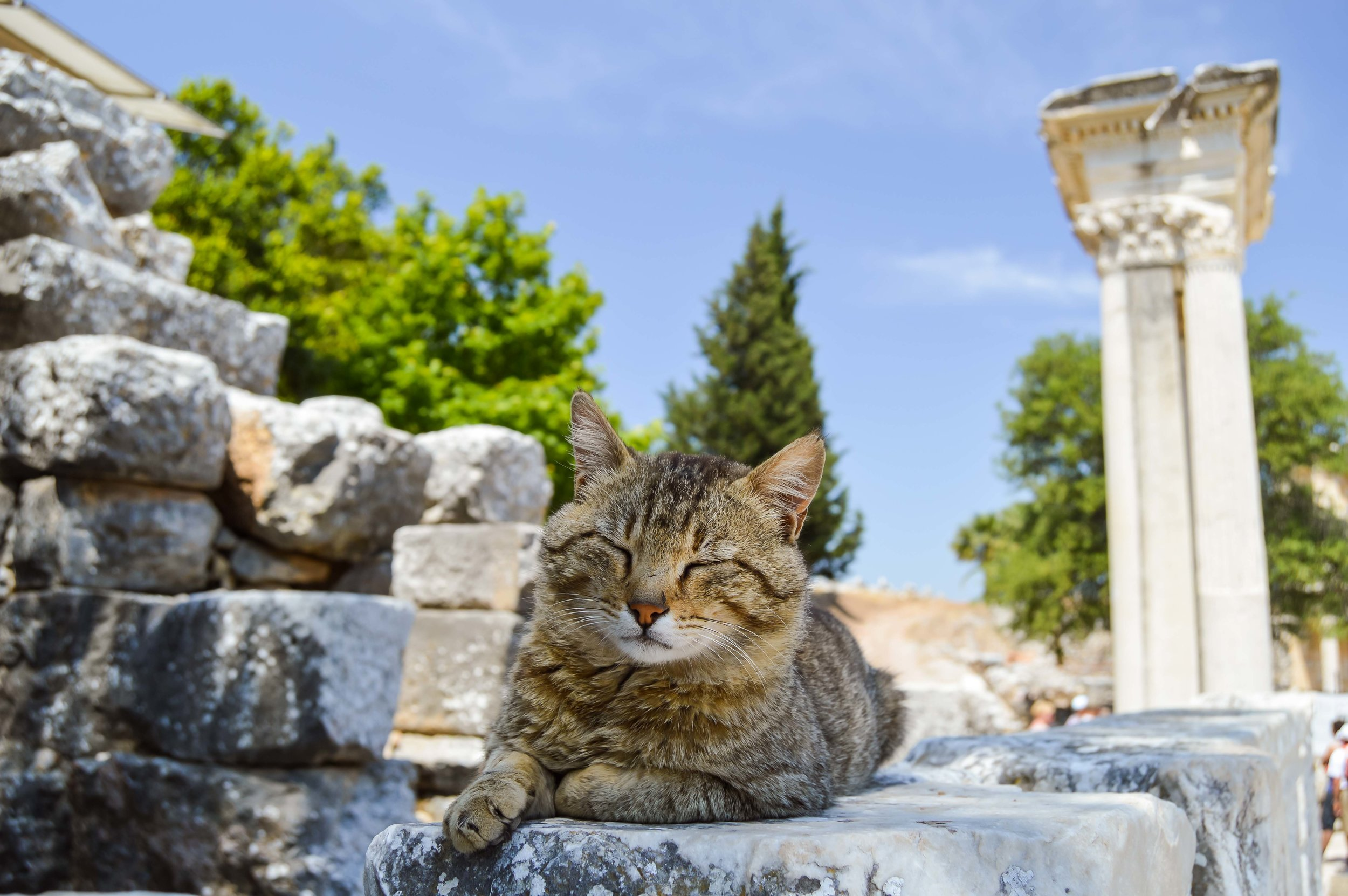 Cat Roman Architecture City of Ephesus Library of Celsus Blue Sky Turkey
