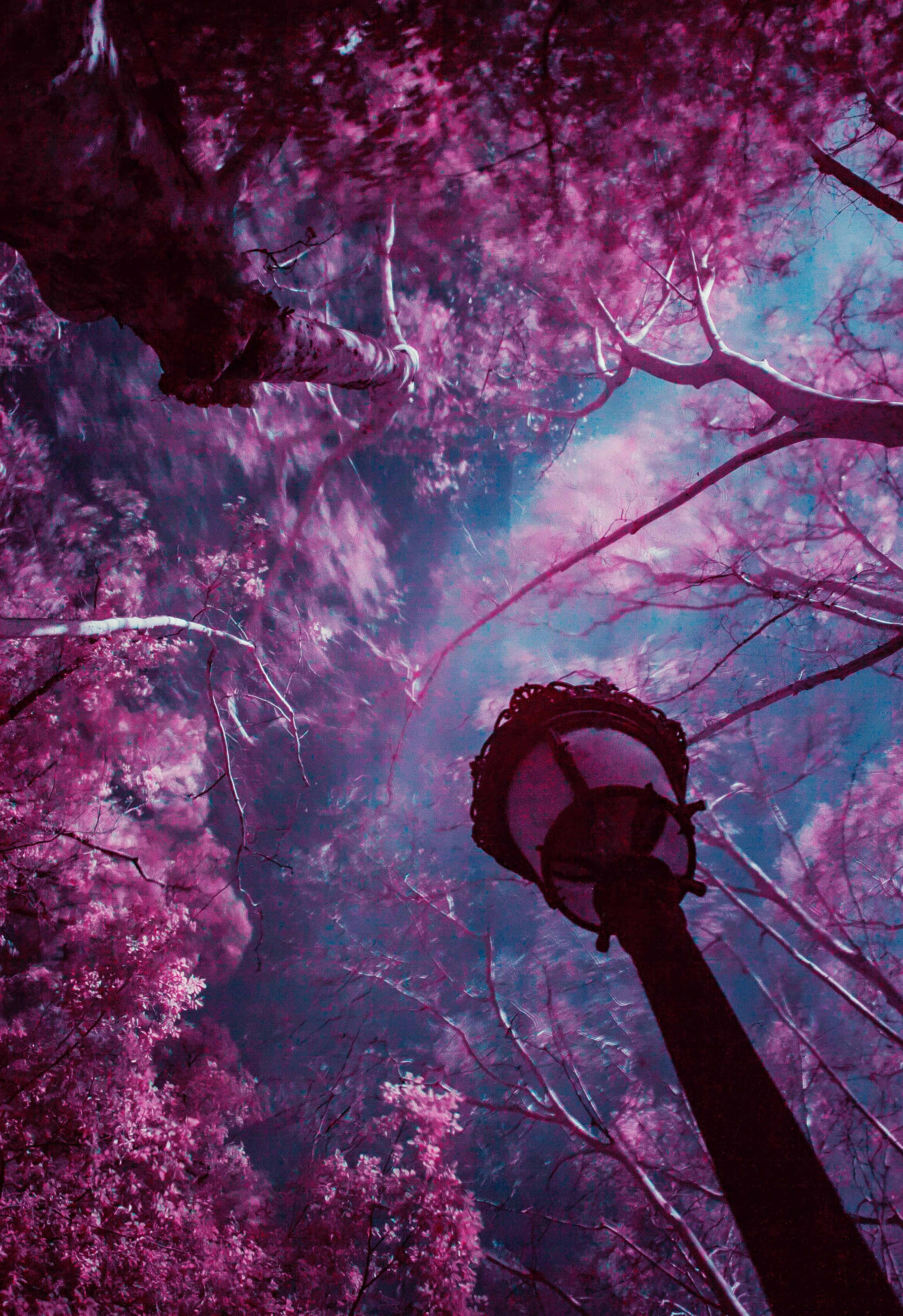 Look up of street lamp infrared pink trees