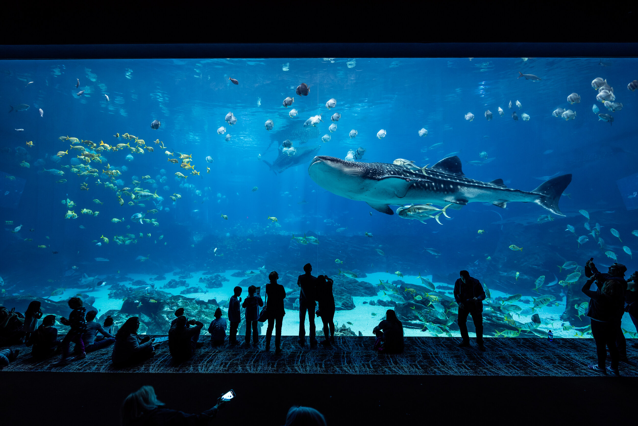 Georgia Aquarium Whale Shark Fish