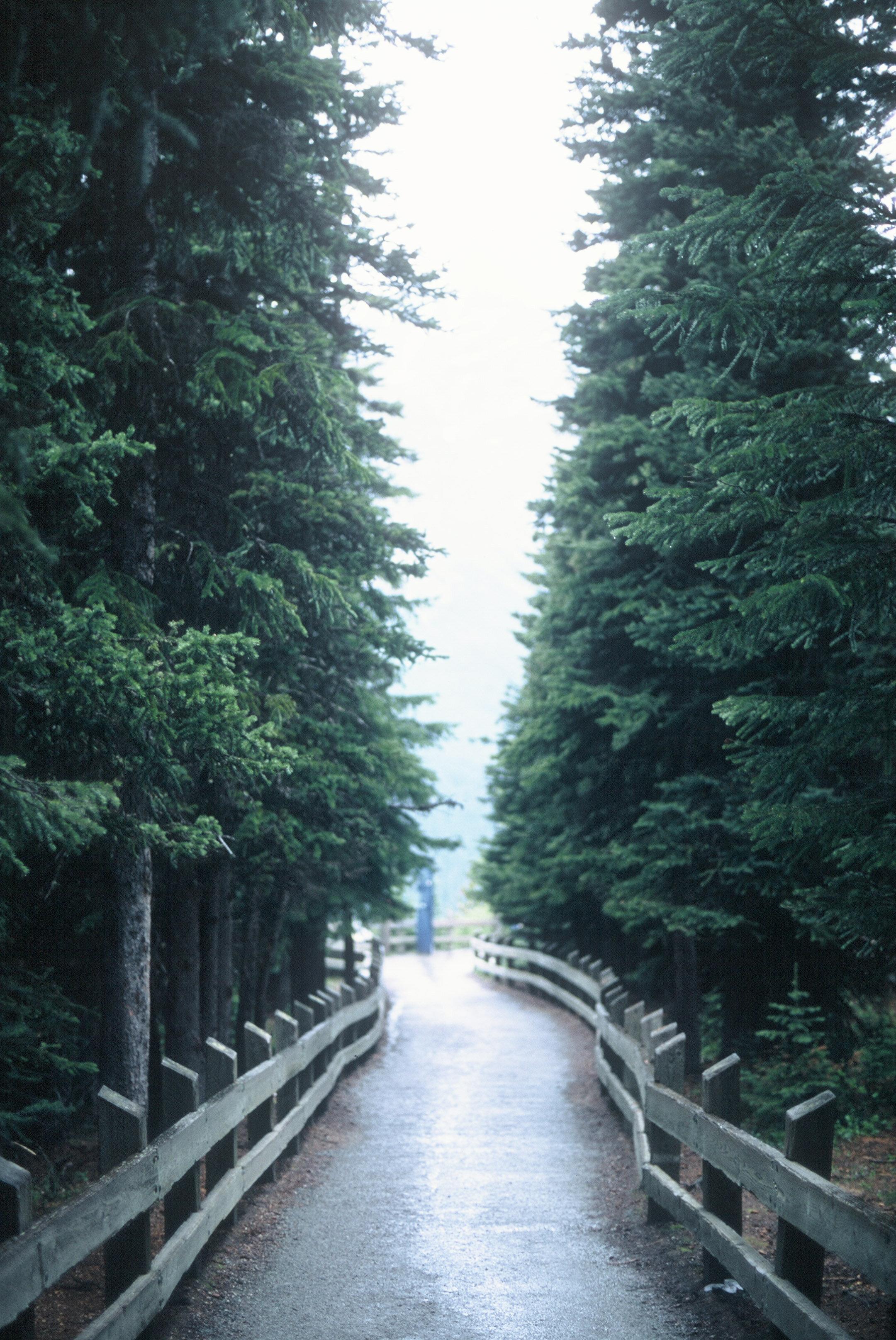 Canadian Rockies Banff Jasper Alberta Mountains 35mm SLR Canon A1 Sample Provia 100f Film Peyto Lake Walkway