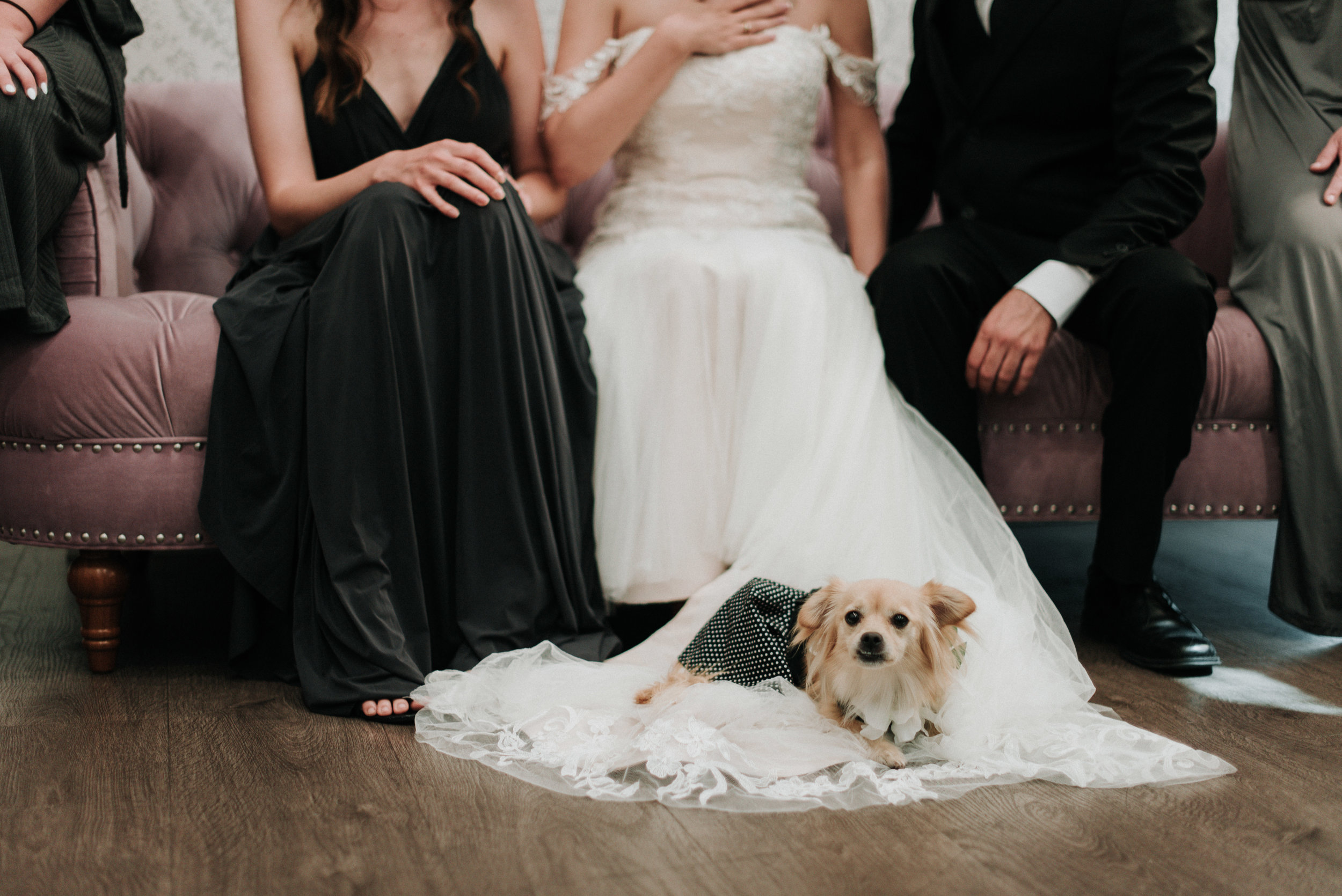 2019-07-21_Danielle_and_Brandon_-_Married_-_Costa_Mesa-87.jpg